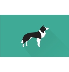 Border collie icon vector