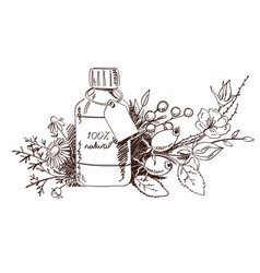 Design with hand drawn herbs and cosmetics vector