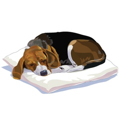 The rest time of beagle vector