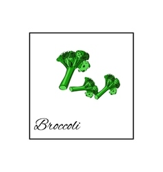 Broccoli isolated drawn vegetables on vector
