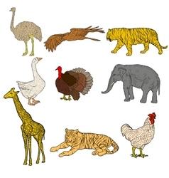 Sketch elephant tiger eagle rooster giraffe vector image vector image