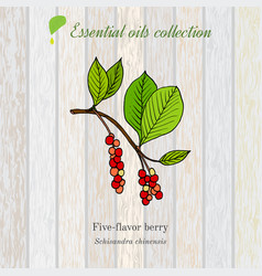 Pure essential oil collection five-flavor berry vector