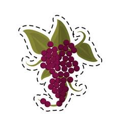 cartoon bunch grape wine icon vector image