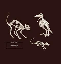 halloween holiday of animal skeleton vector image vector image