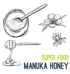 manuka honey super food hand drawn sketch vector image vector image