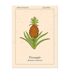 Pineapple ananas comosus tropical plant vector