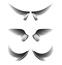 Set gray wings on white background design element vector