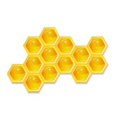 Organic raw honey healthy food production vector