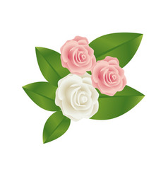 Bouquet bud roses with leaves floral design vector