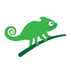 chameleon lizard sitting on branch vector image
