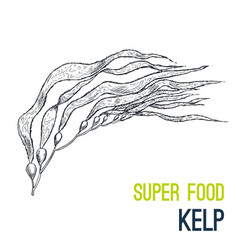 kelp super food hand drawn sketch vector image