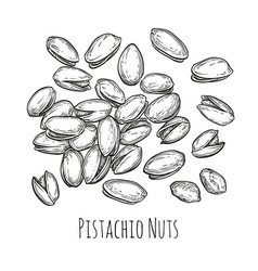 handful of pistachio nuts vector image vector image