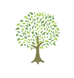 summer tree leaves vector image vector image