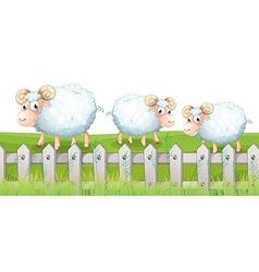 Three sheeps vector image vector image