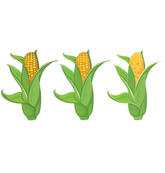 Collection corn vector