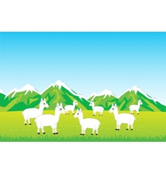 Herd sheep in field vector