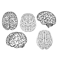 Black and white cartoon human brains vector