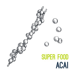 acai super food hand drawn sketch vector image vector image