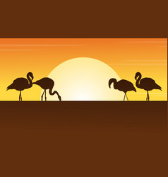 At sunset flamingo scene silhouettes vector