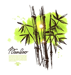 Background with hand drawn sketch bamboo vector image vector image