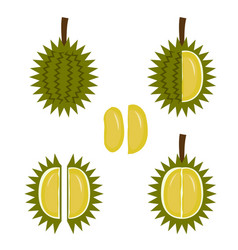durian fruit icon in flat style vector image vector image