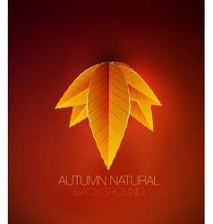 Autumn leaves concept nature background vector image