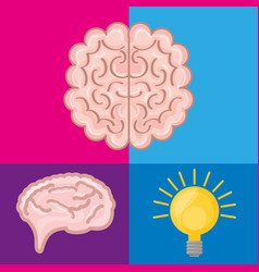 Brain set icon knowledge and creativity vector