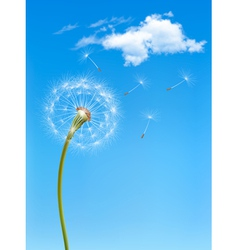 Background with a dandelion in front of a blue sky vector image