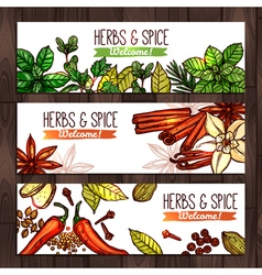Herbs and spice collection of banners vector
