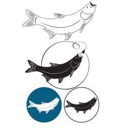 fish chub vector image