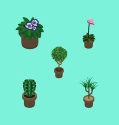 Isometric flower set of flowerpot tree peyote vector