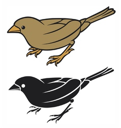 sparrow - small bird vector image