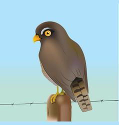 eurasian sparrow-hawk vector image