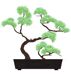 Bonsai green tree vector
