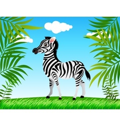 Zebra in the wild vector