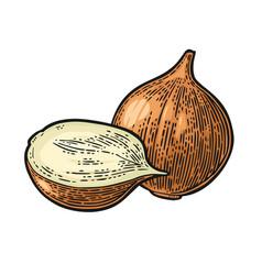 Whole and half onion black vintage vector