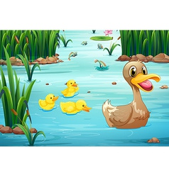 Ducks and pond vector image