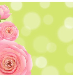 Pink rose with bokeh vector