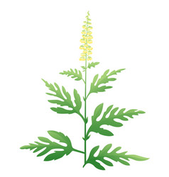 ragweed plant vector image vector image