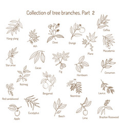 set of different tree branches vector image