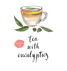 Eucalyptus leaves and herbal tea vector