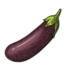eggplant color vintage engraved vector image vector image