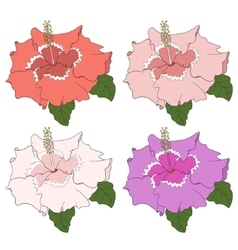 Hibiscus flower hand draw on white background vector image vector image