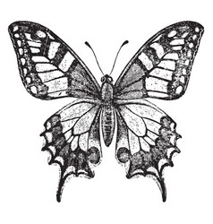 old world swallowtail butterfly vintage vector image