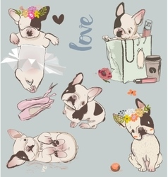 set with little cute bulldogs vector image