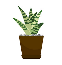 Cactus house plant in flower pot vector