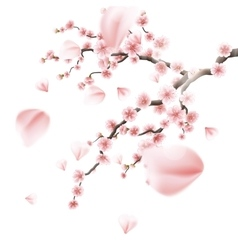 Realistic sakura japan cherry branch eps 10 vector