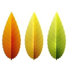 autumn leaves collections vector image