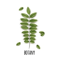 Eco botany poster vector
