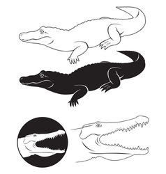 alligator vector image vector image